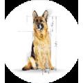 Сухие корма для собак старше 6 лет
