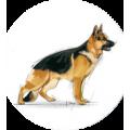 Сухие корма для взрослых собак