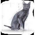 Сухие корма для взрослых кошек (от года до шести лет)