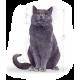 Пожилые кошки(7+)